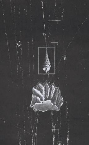 Thaddée, collage sur papier, 24,5×15 cm, 2017
